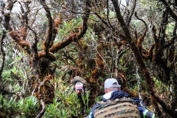 El camino a Sitio Hilda recorre bosque nuboso influenciado por el mar Caribe y el océano Pacífico.