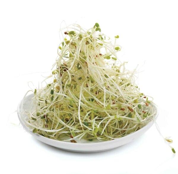 Los brotes de alfalfa contienen los aminoácidos más importantes, vitaminas A, B,C, E, K, calcio, hierro, zinc, selenio, potasio y magnesio.