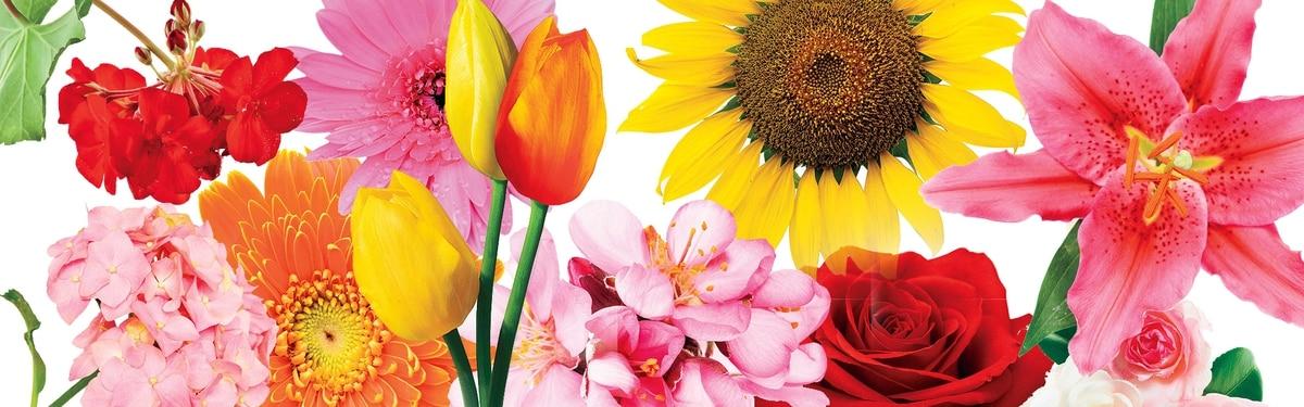 El Significado Detrás De Cada Flor Revista Perfil