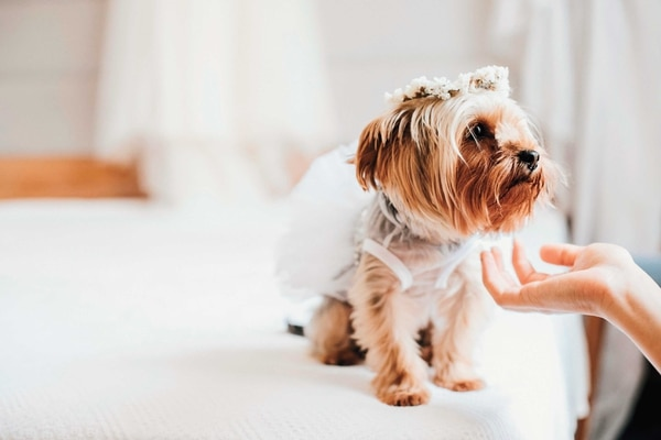 Tips para una boda pet friendly. Foto Shutterstock.com